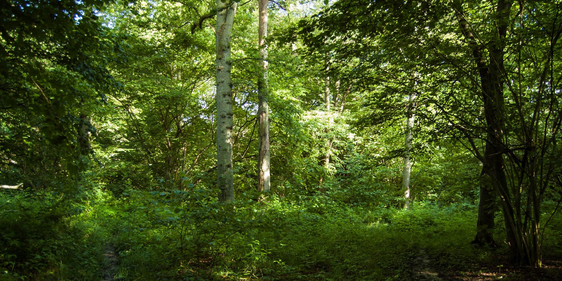 Prästängens Naturreservat 2015
