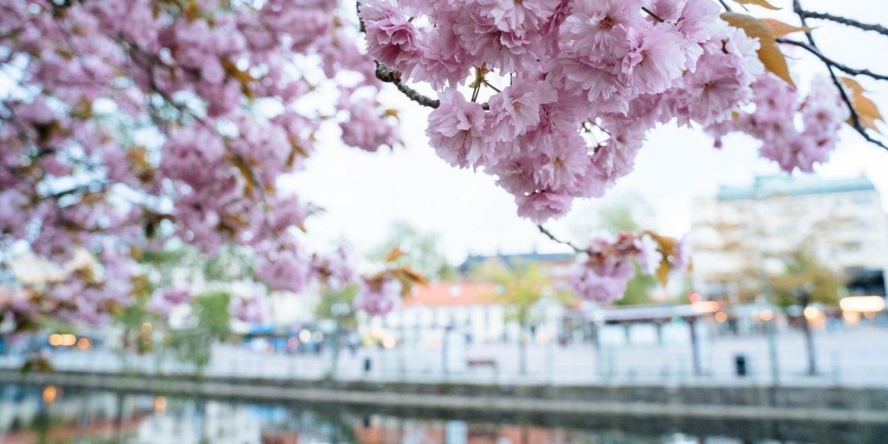 Borås Stadsparken 2019