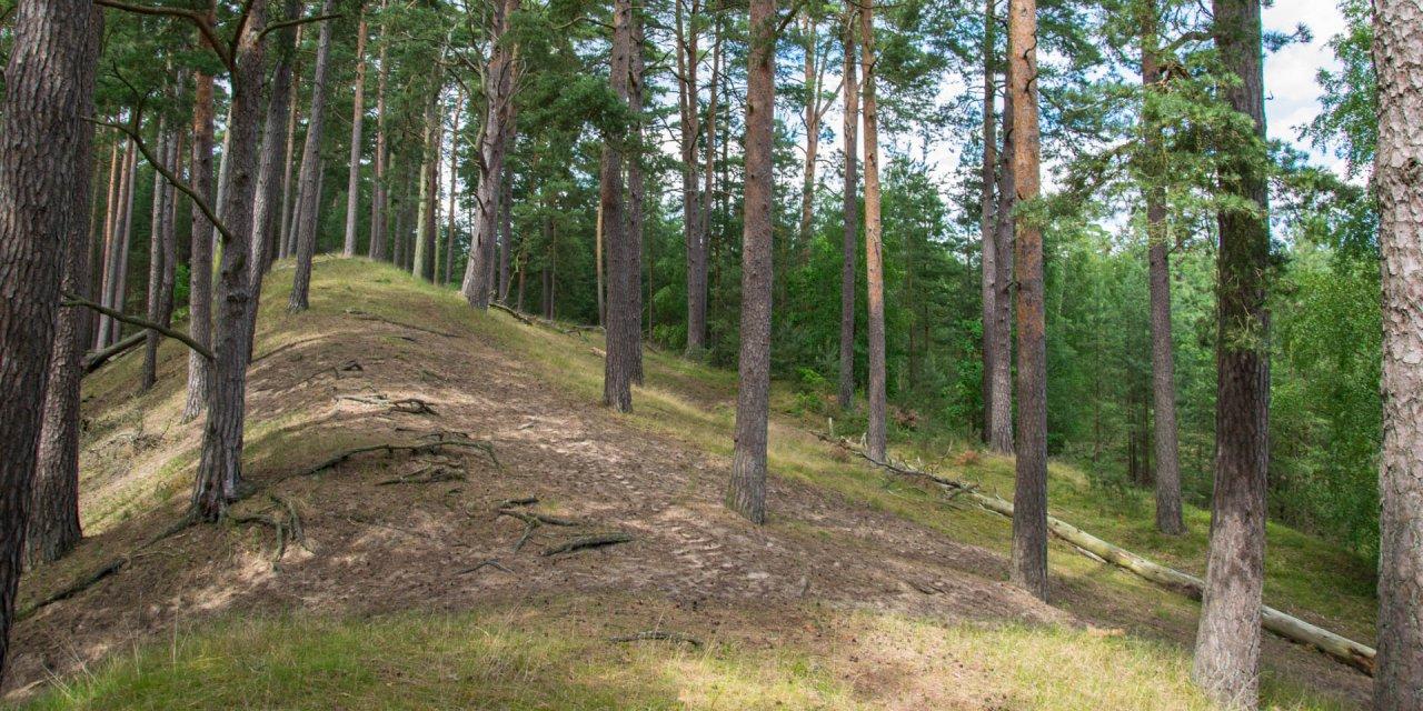 Pestbackens Naturvårdsområde 2016