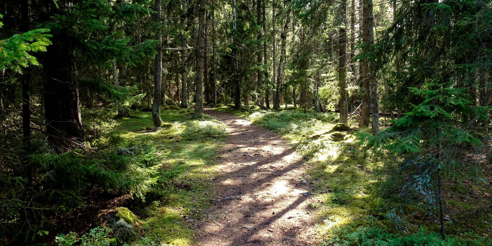 Adelsö-Sättra Naturreservat 2016