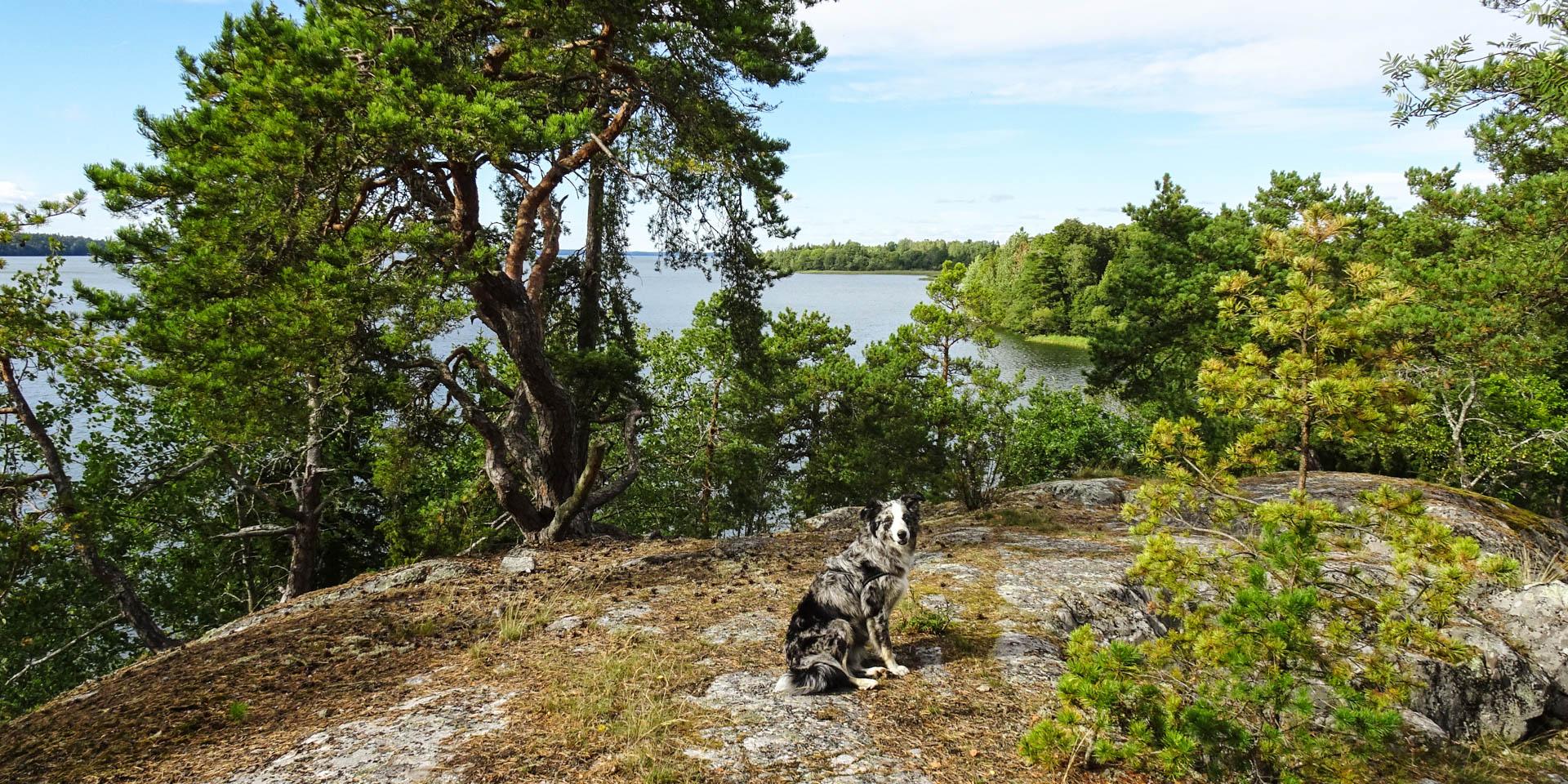 Väsby Hage Naturreservat 2016