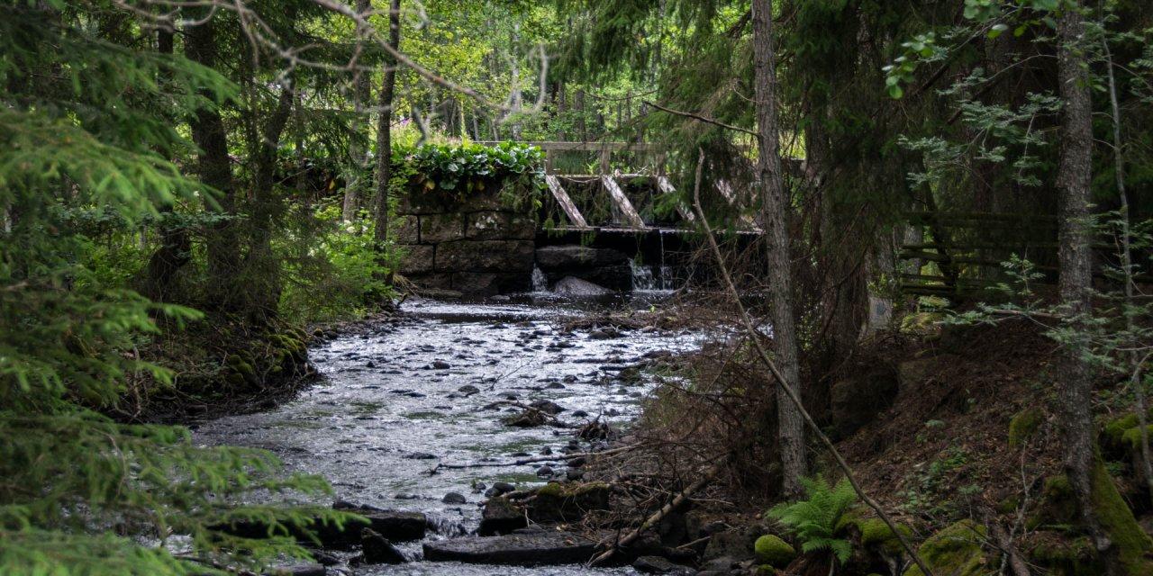 Hässleby-Silveråns Naturreservat 2017