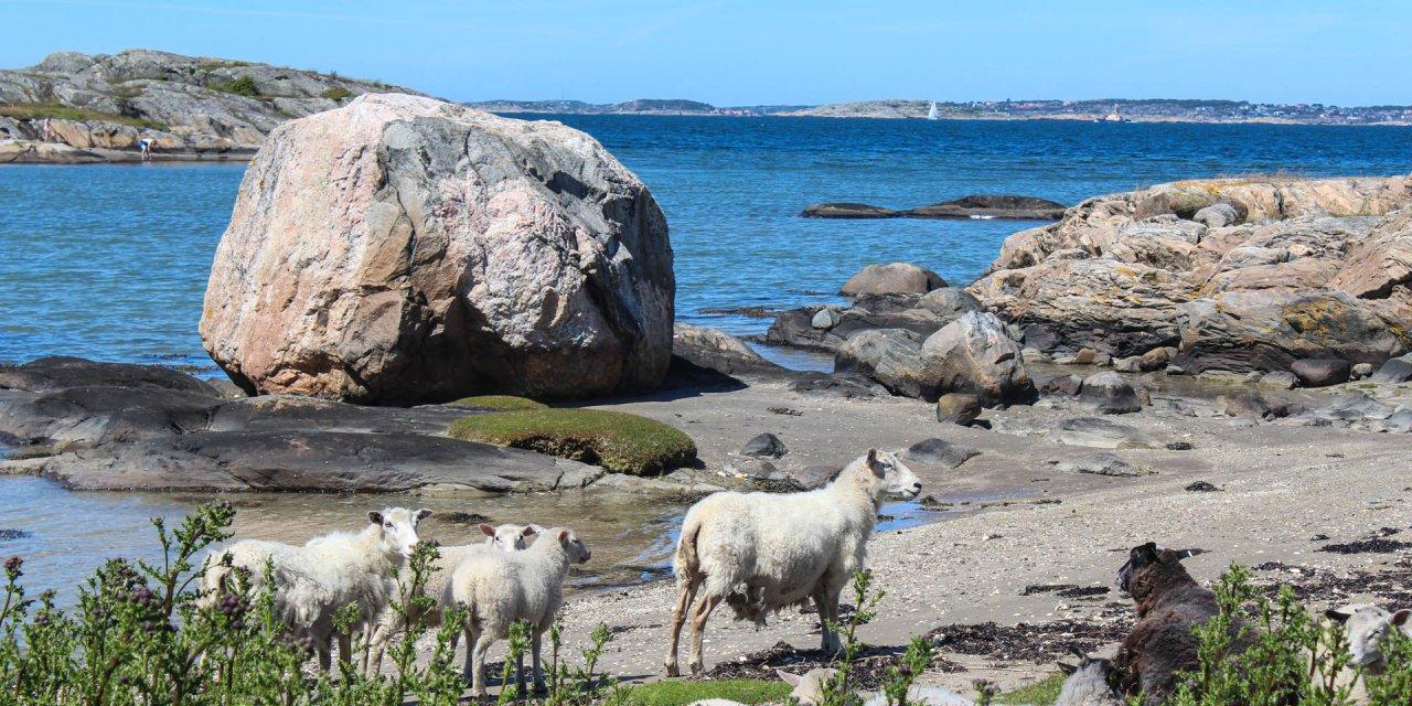 Galterö Naturreservat 2015