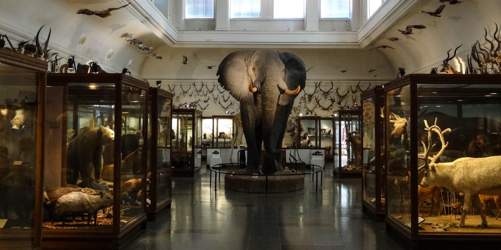 Göteborgs Naturhistoriska Museum 2017