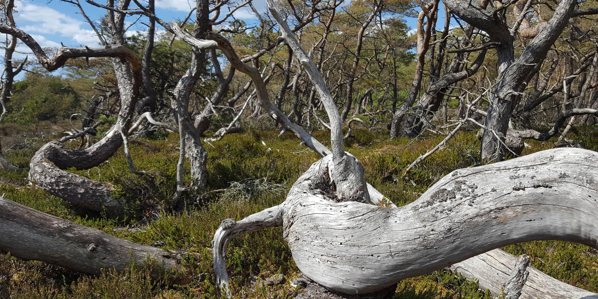 Haverdals Naturreservat 2020