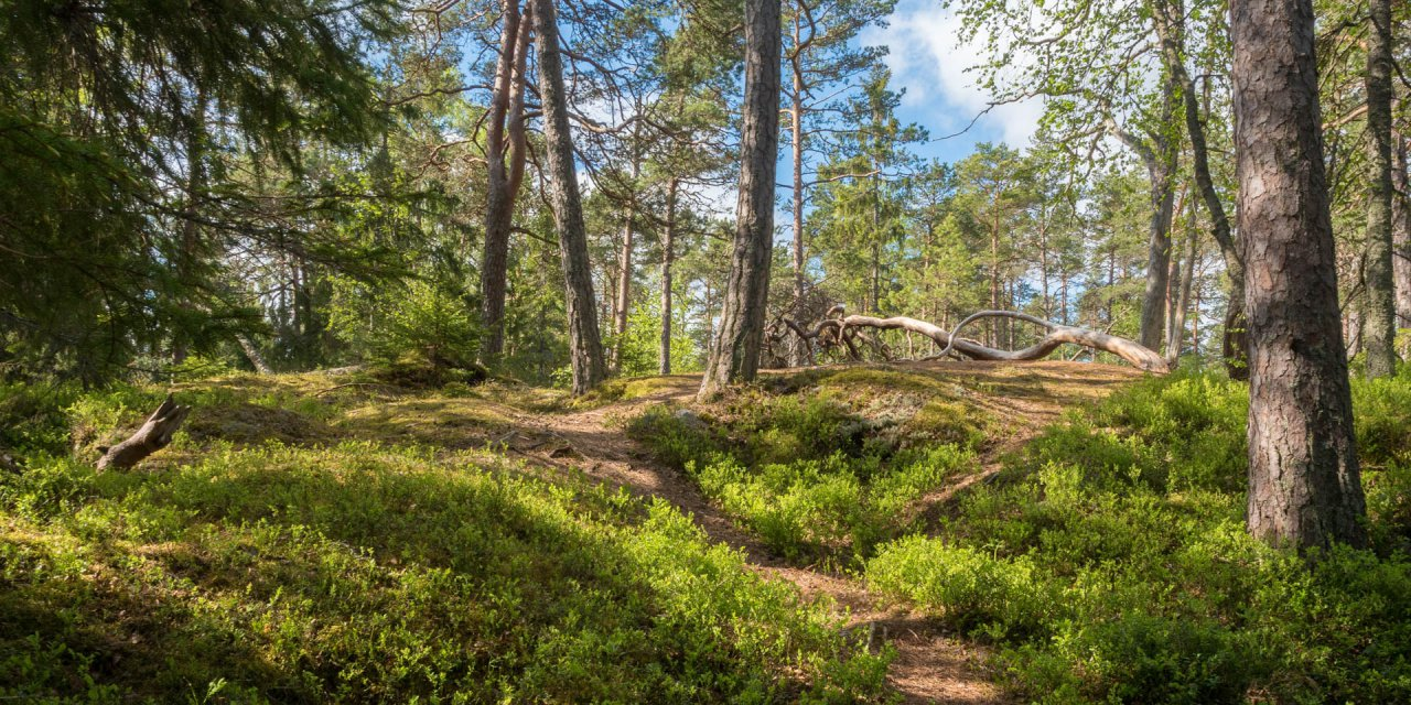 Tyresta Nationalpark 2016