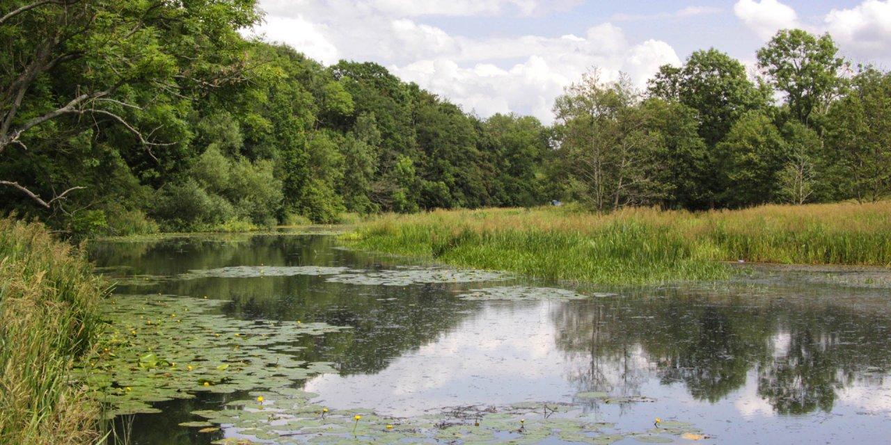 Rååns Dalgångs Naturreservat 2009