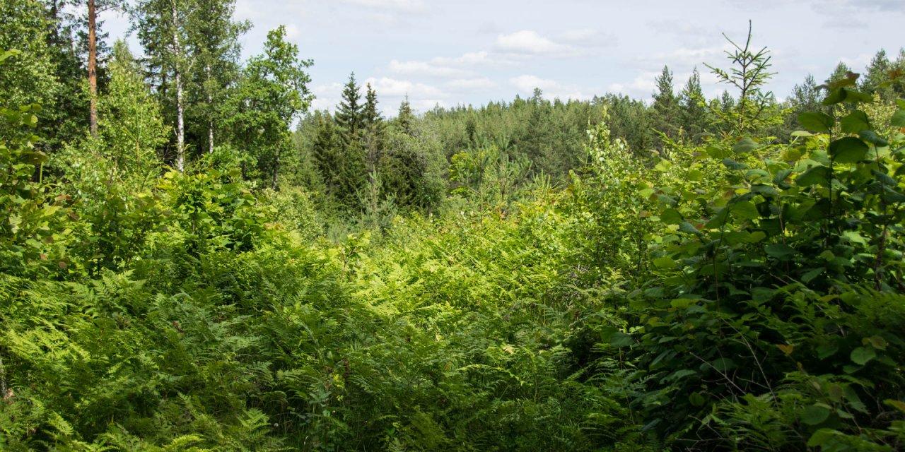 Knästorps Naturreservat 2017
