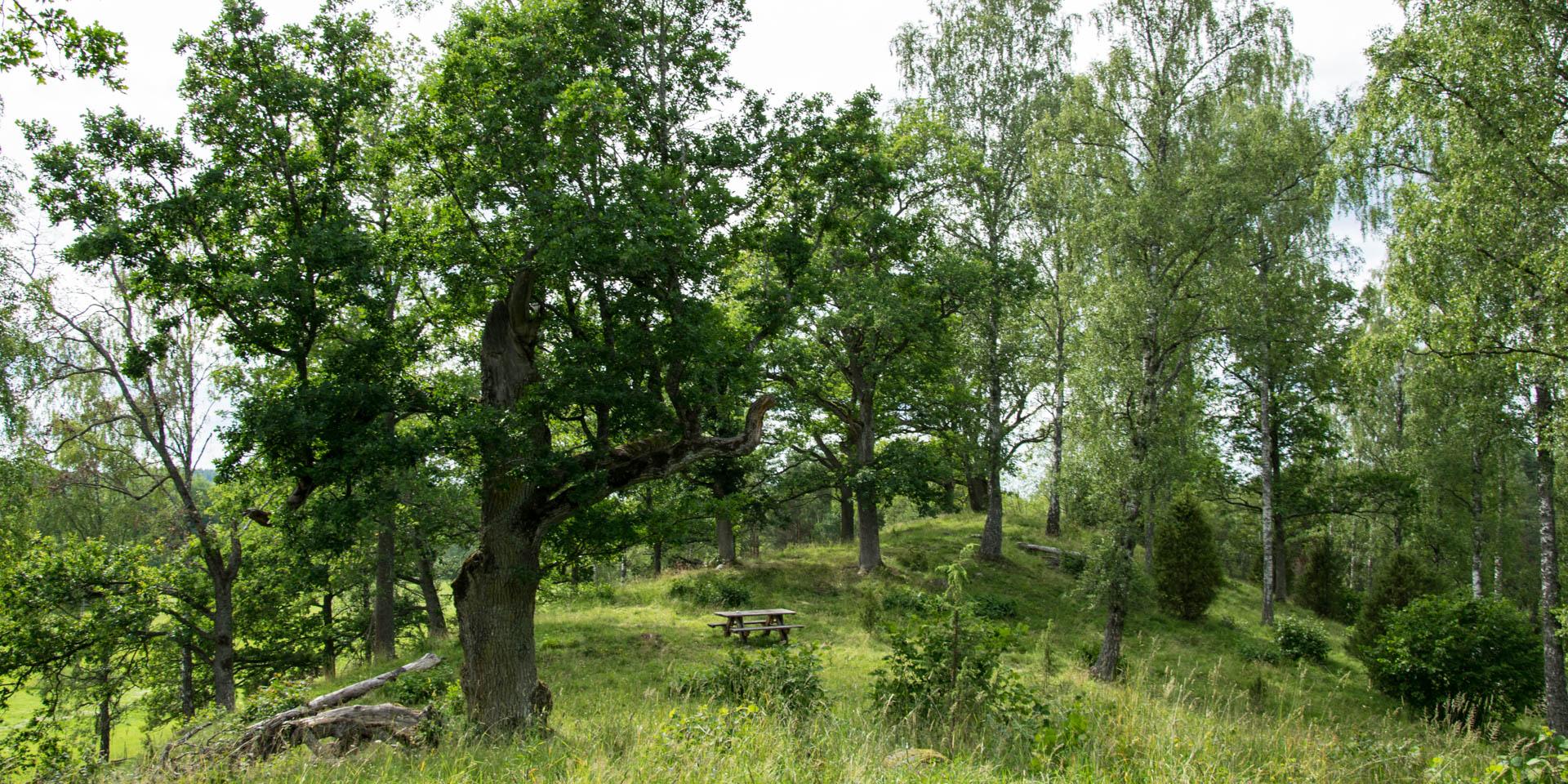 Lundens Naturreservat 2017