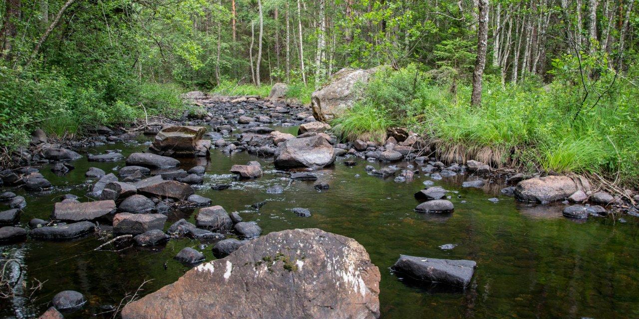 Sällevadsåns Dalgångs Naturreservat 2017