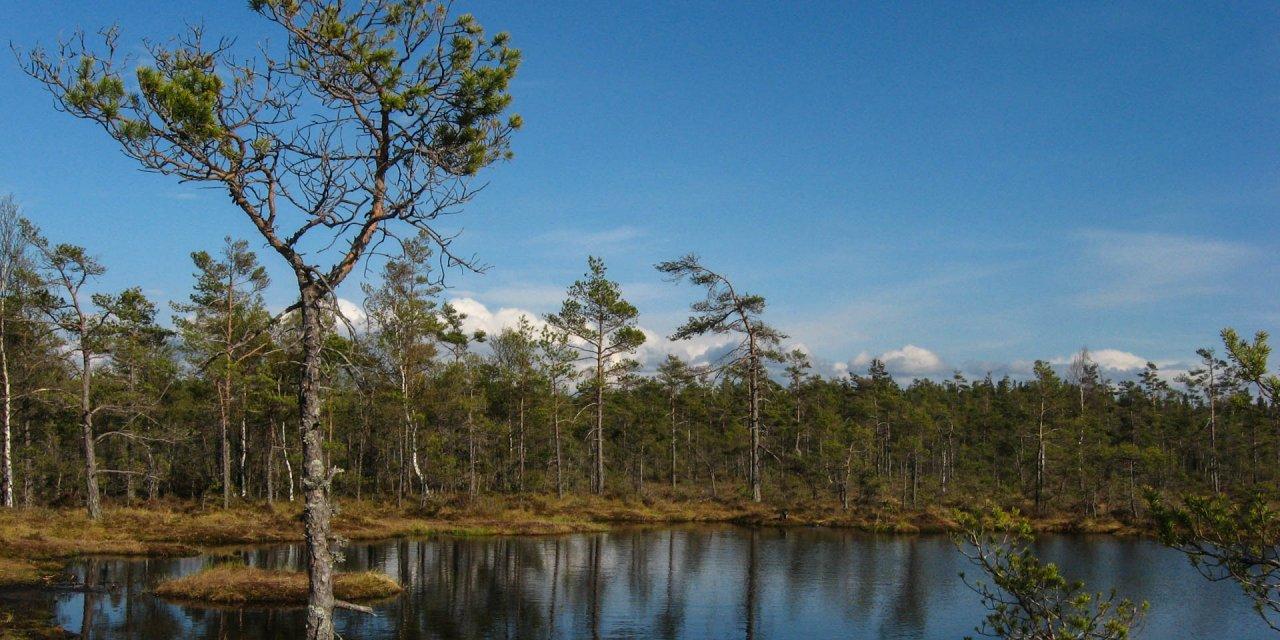 Dumme Mosse Naturreservat 2011
