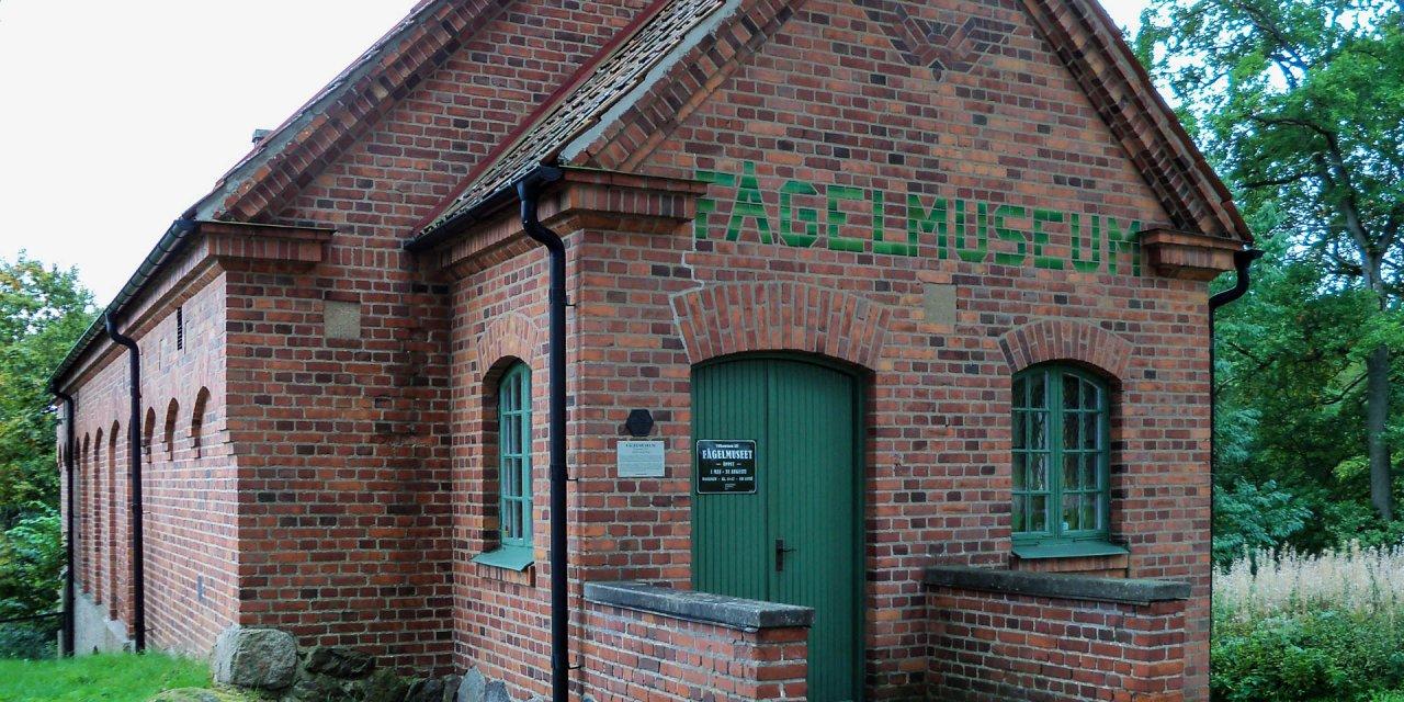 Fågelmuseet 2011