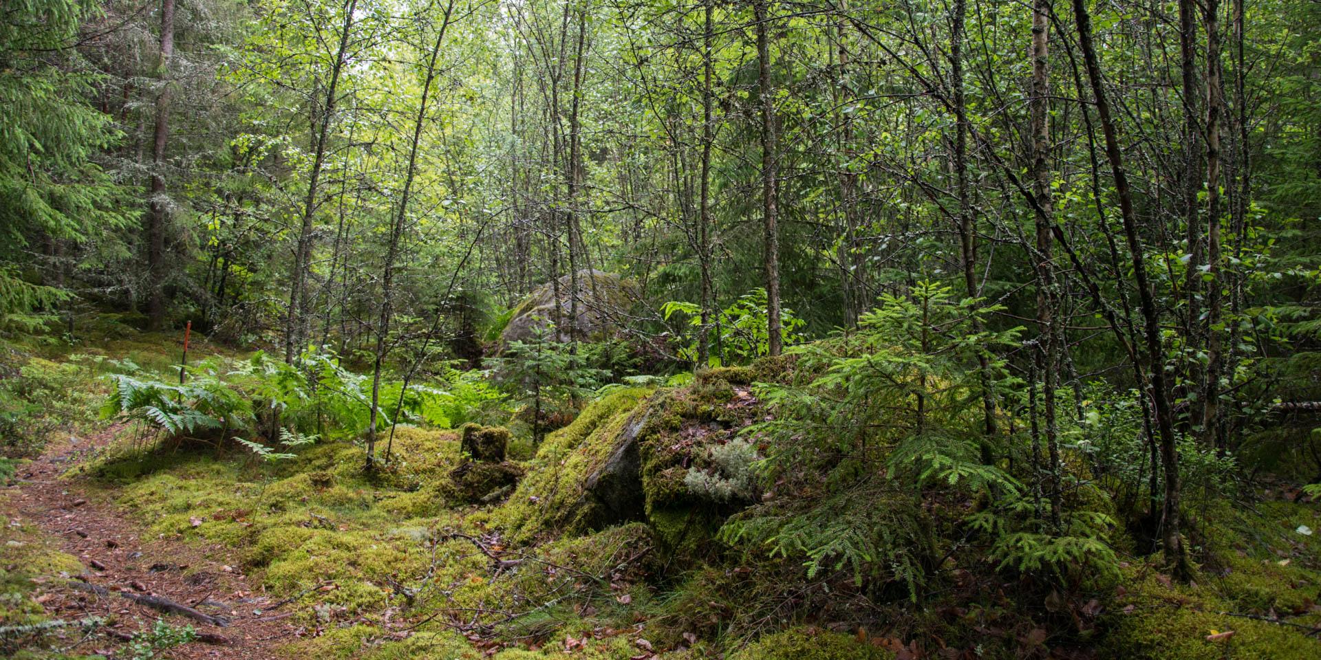 Bökemåla Naturreservat 2017