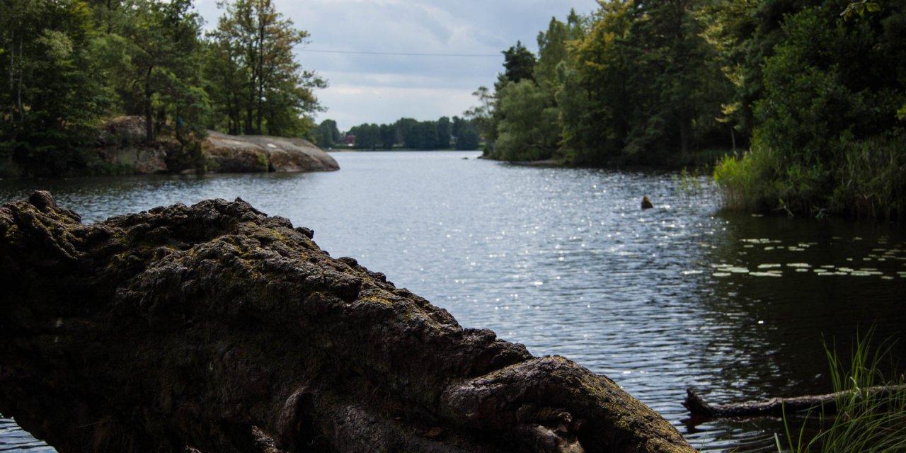 Långasjönäs Naturreservat 2015
