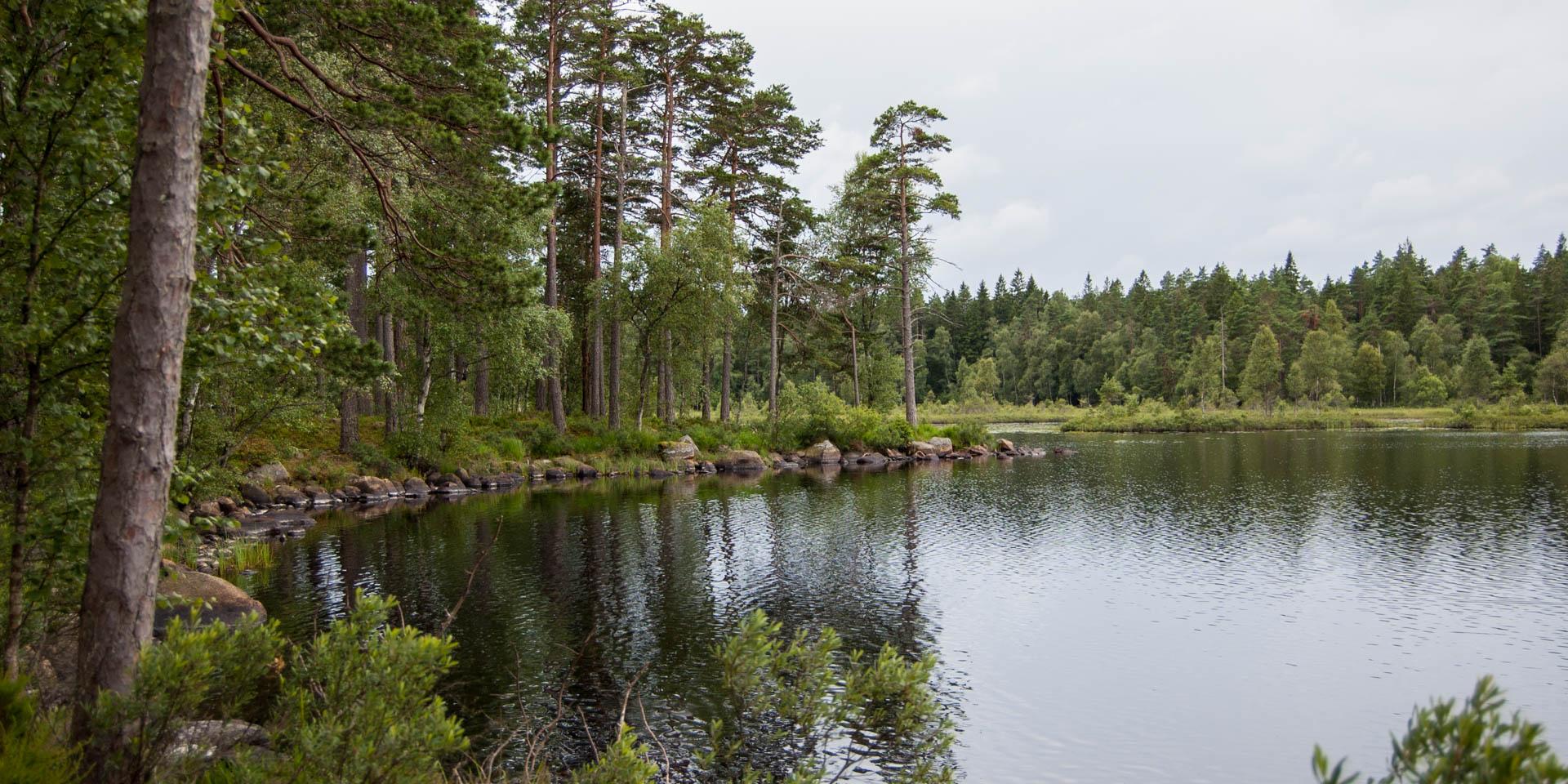 Visjön Naturreservat 2015