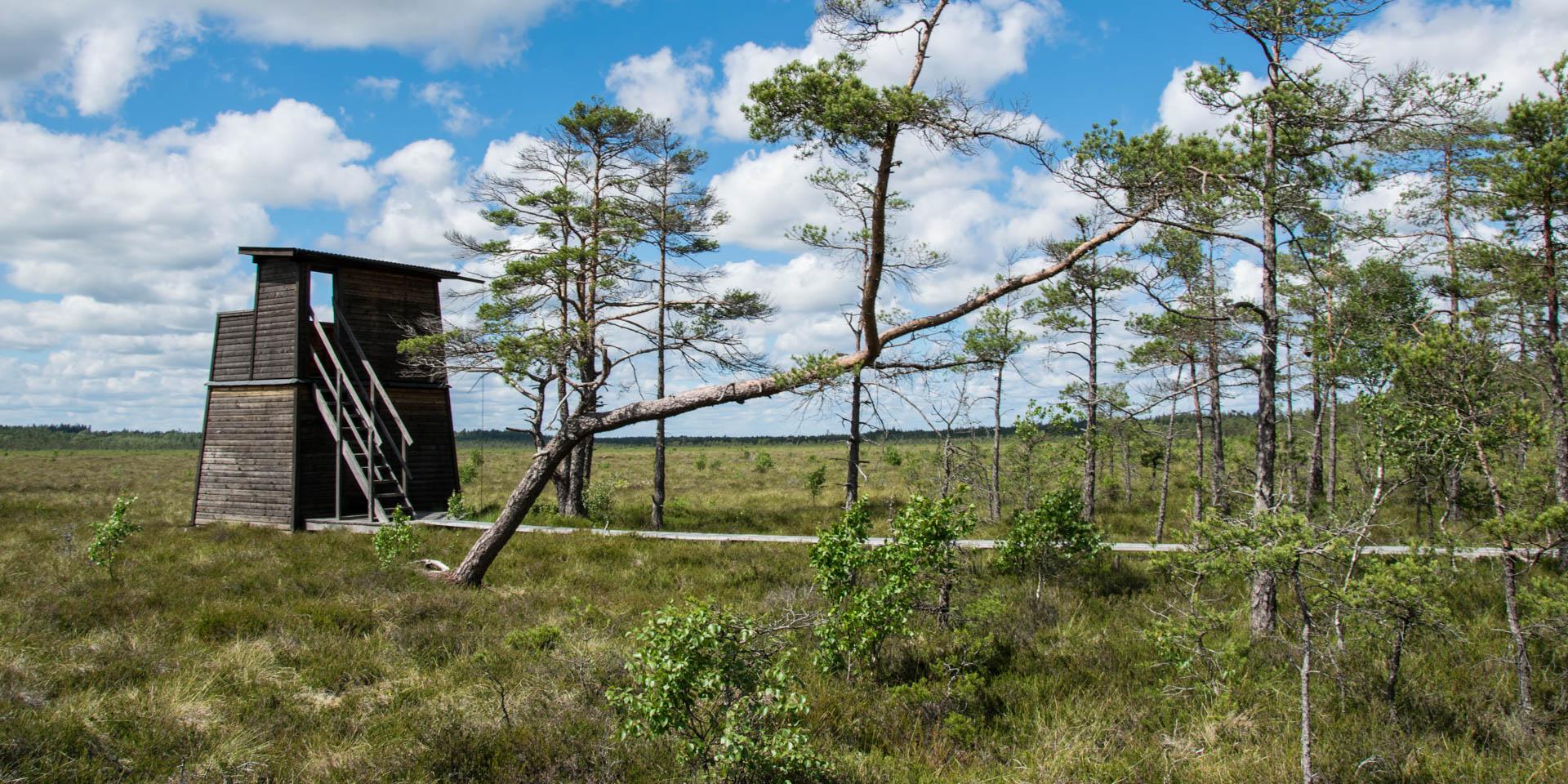 Horsnäsamossens Naturreservat 2019