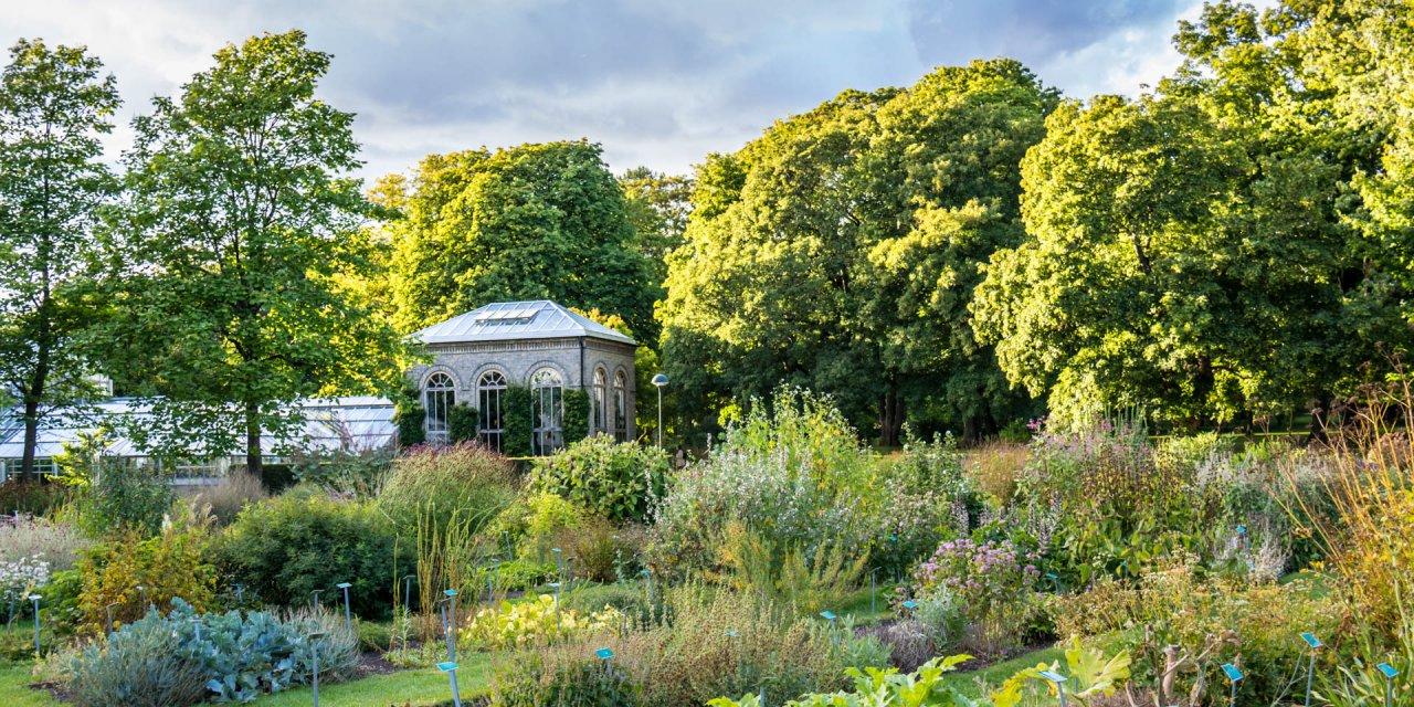 Botaniska Trädgården 2016