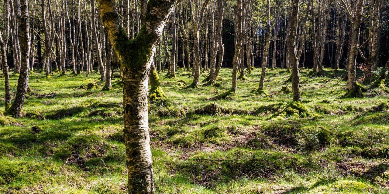Häckeberga Naturreservat 2015