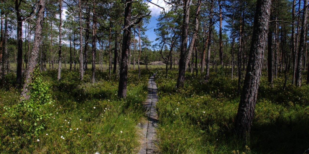 Fjällmossen Naturreservat 2015