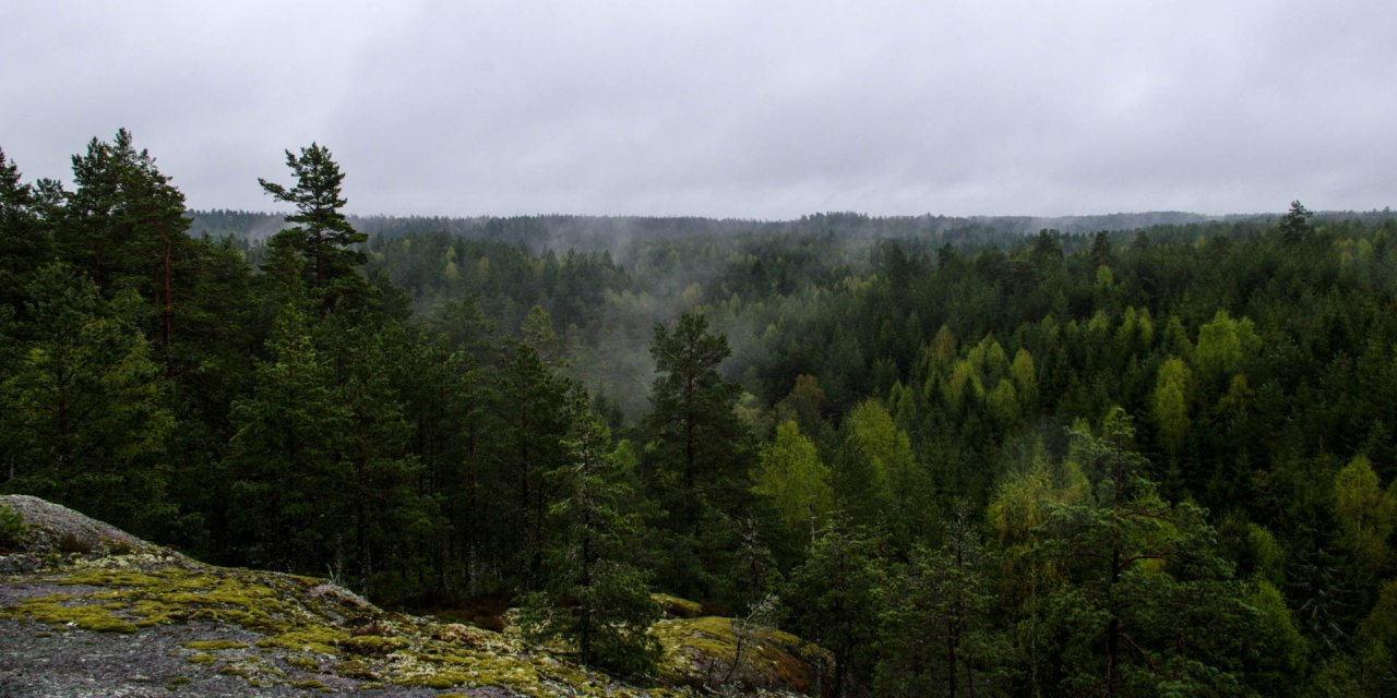 Glotternskogens Naturreservat 2014