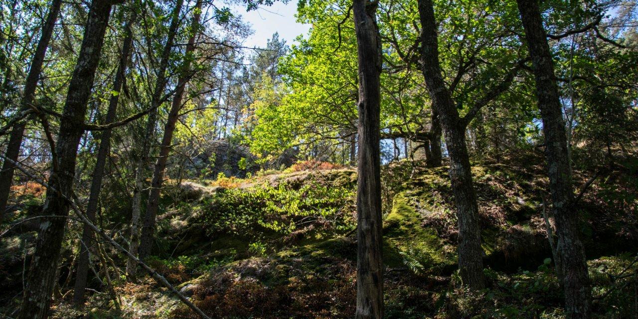 Korpbergets Naturreservat 2018