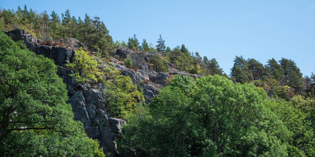 Norrkrogs Naturreservat 2018
