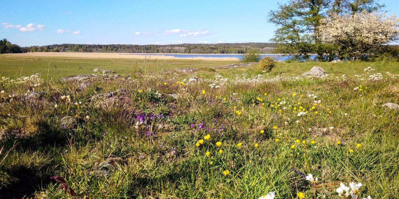 Labro Ängars Naturreservat 2020