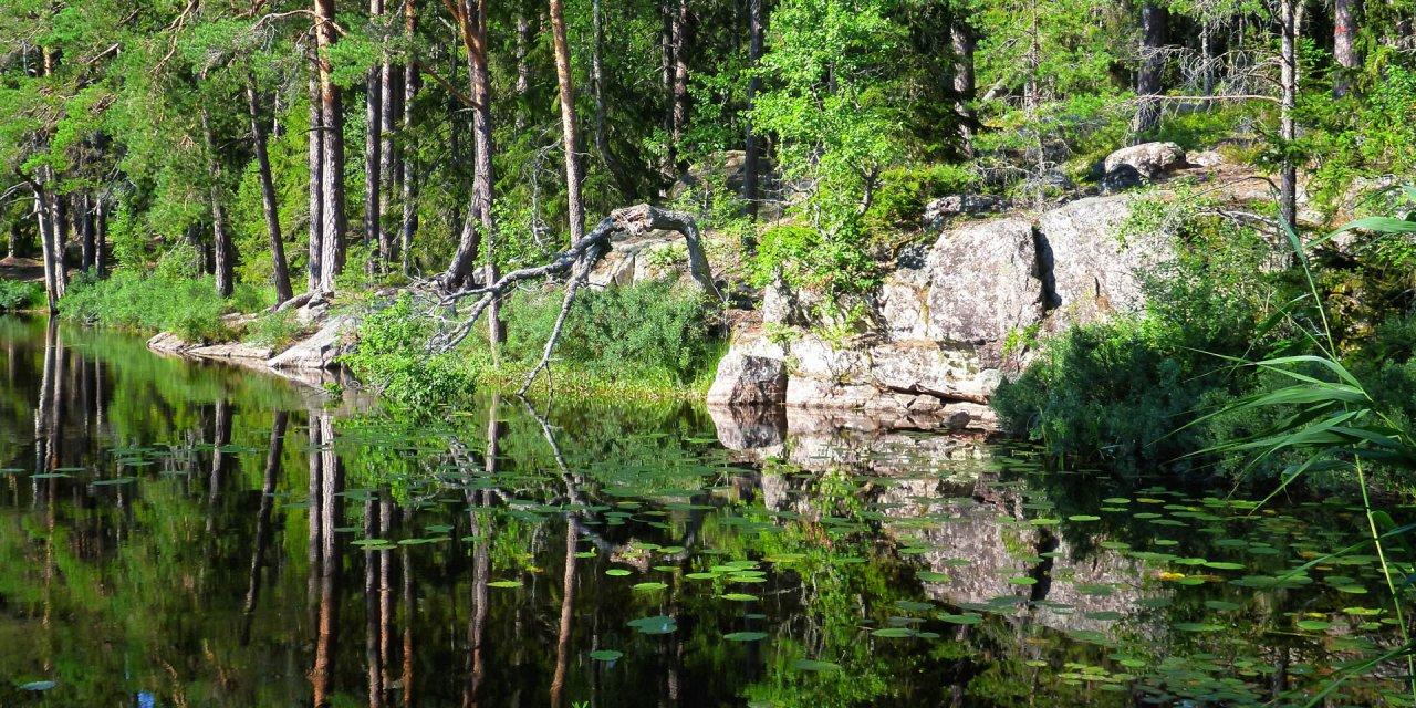 Nävsjöns Naturreservat 2019