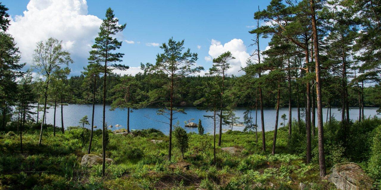 Halens Naturreservat 2016