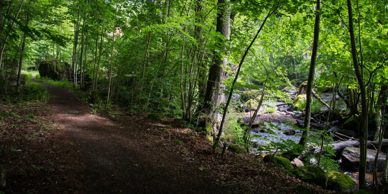 Ljungryda & Östafors Bruk Naturreservat 2016