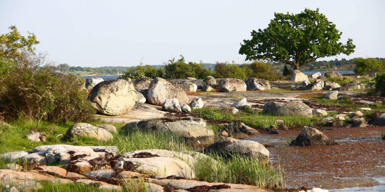 Almö Naturreservat 2010
