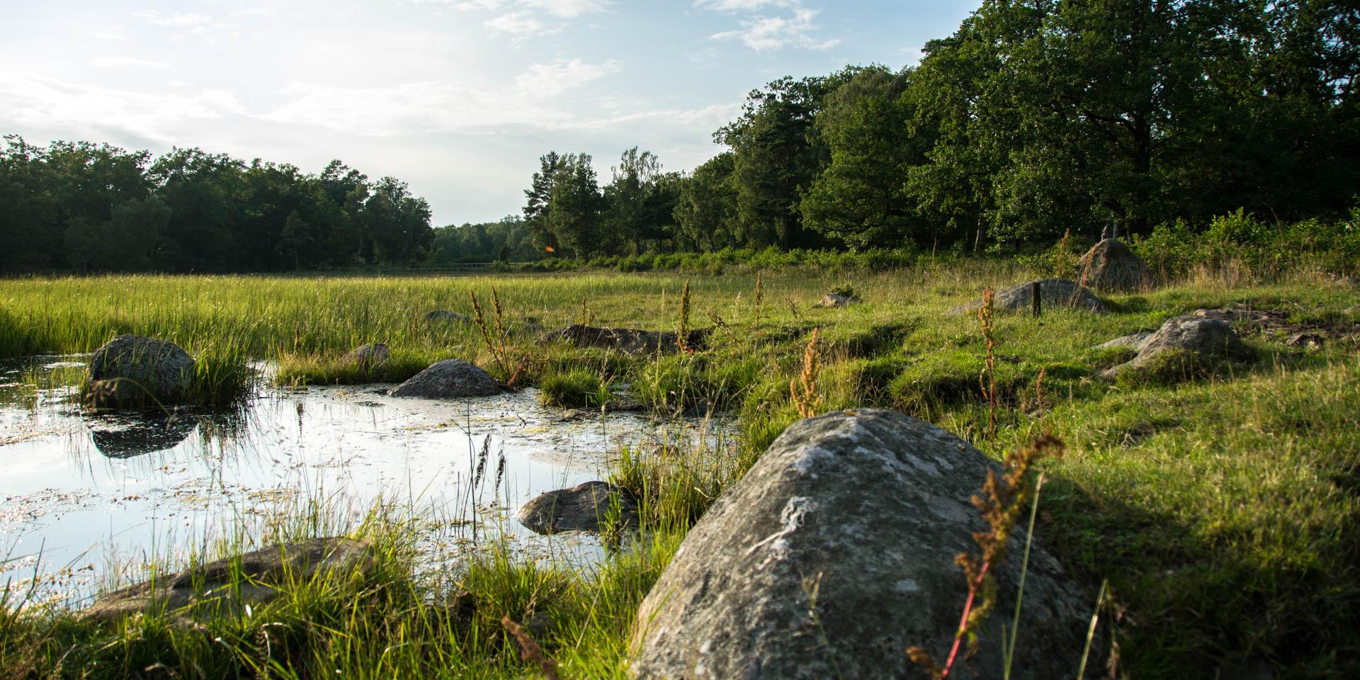 Vambåsa Hagmarker Naturreservat 2017