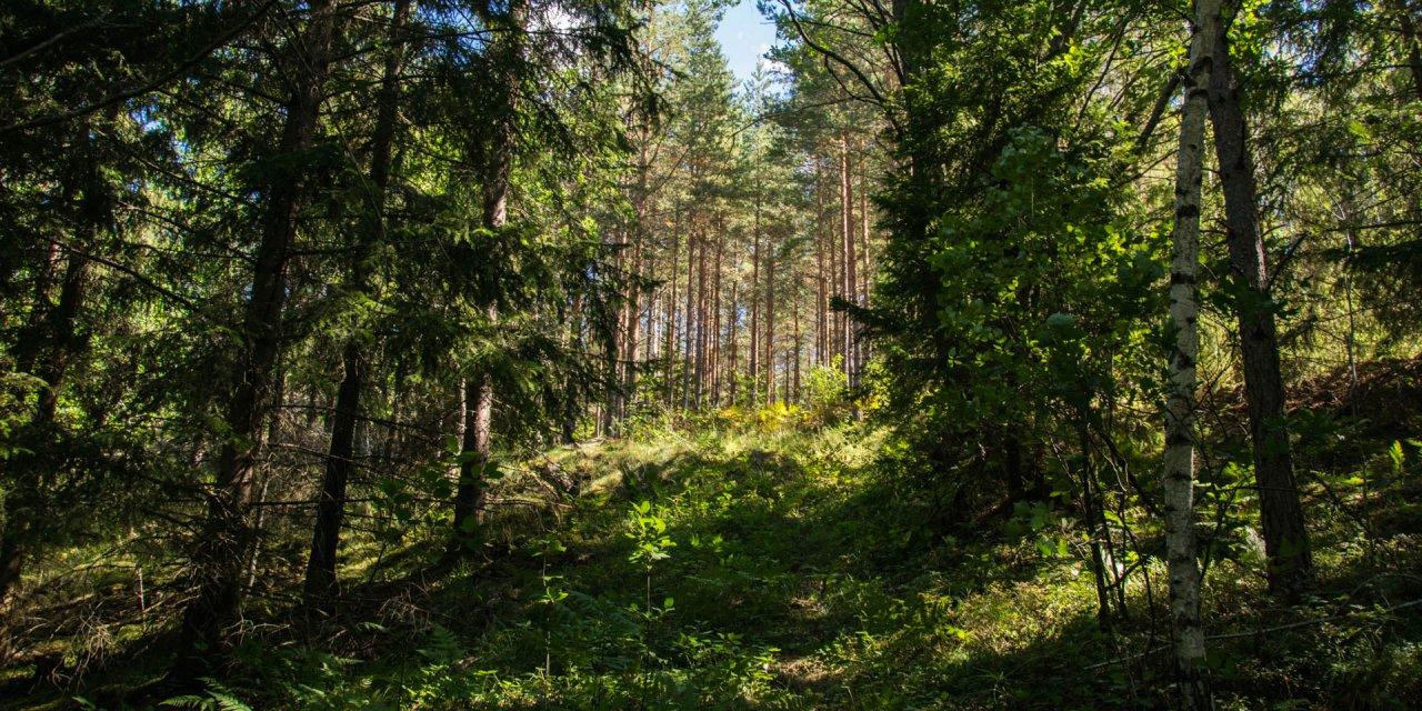 Hälla Naturreservat 2018