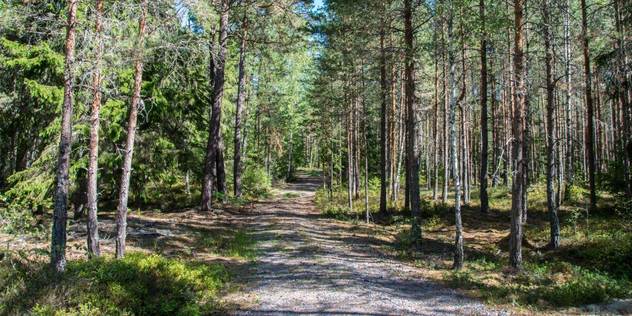 Svartdalens Naturreservat 2018