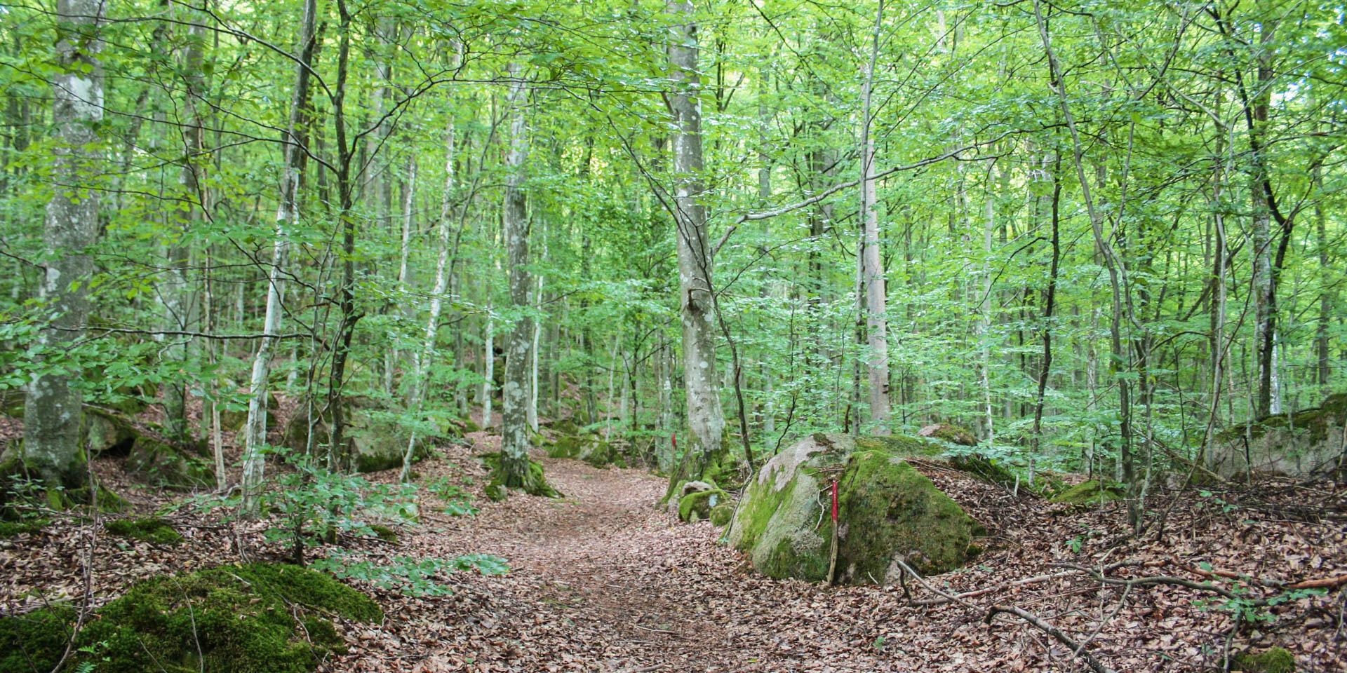 Skinsagylets Naturreservat 2015
