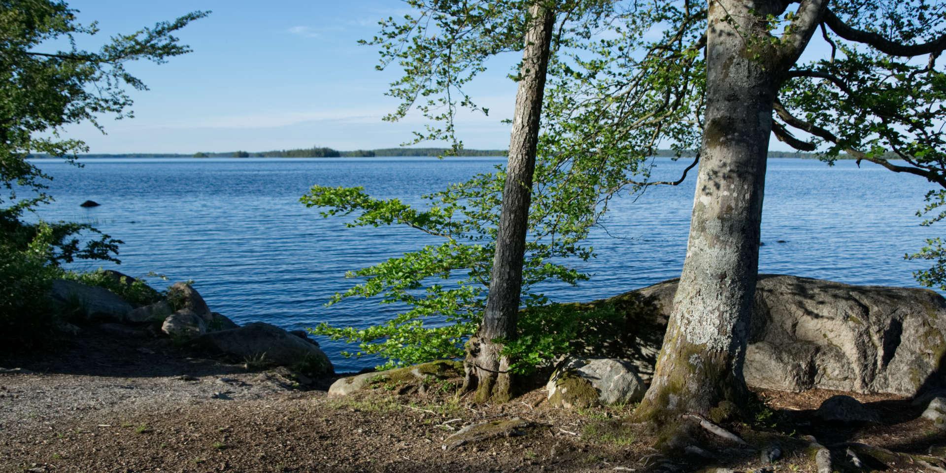 Åsnens Nationalpark 2019