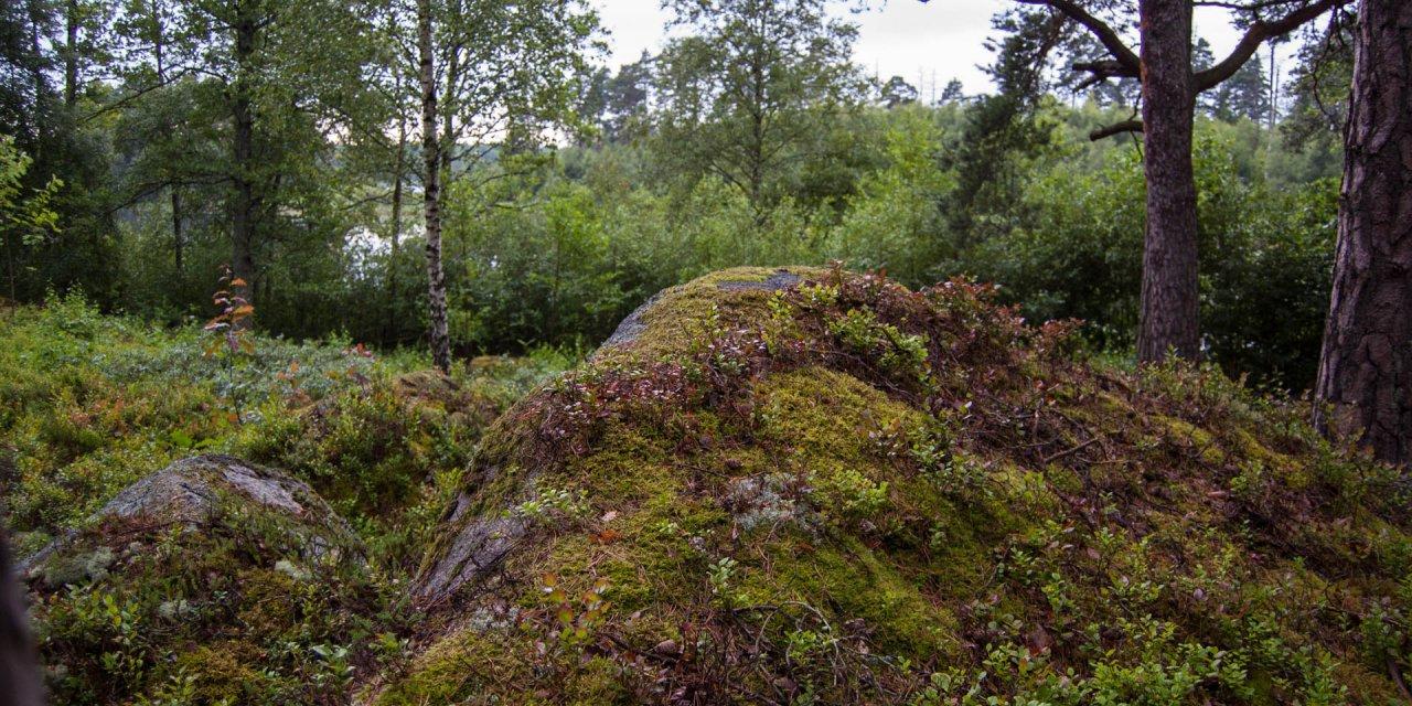 Ljuva Mons Naturreservat 2015