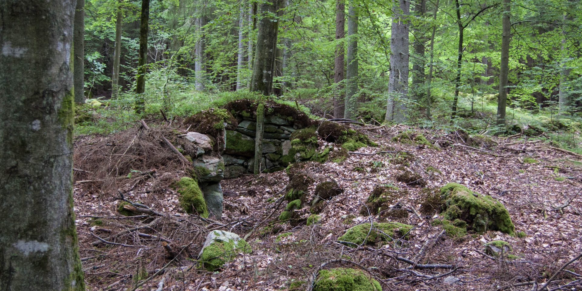 Midingsbråte Naturreservat 2015