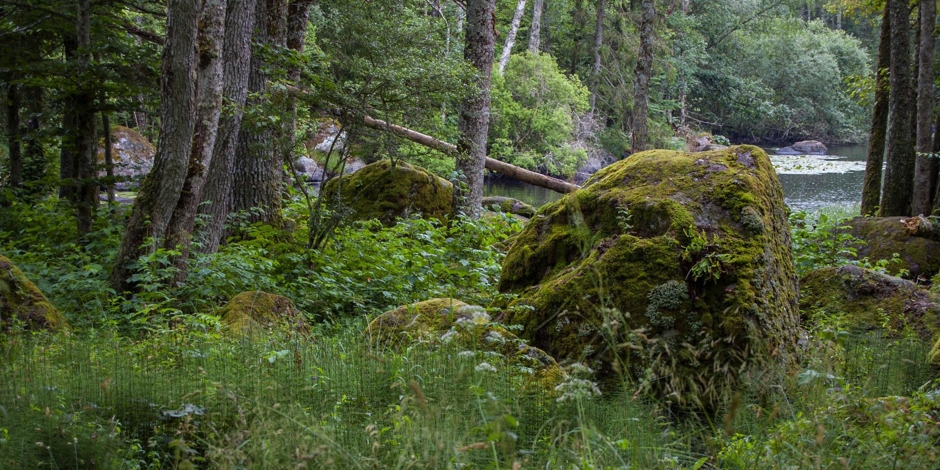 Stenfors Naturreservat 2015