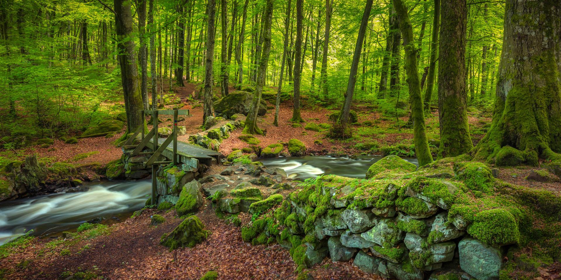 Gässlösa Naturreservat 2017