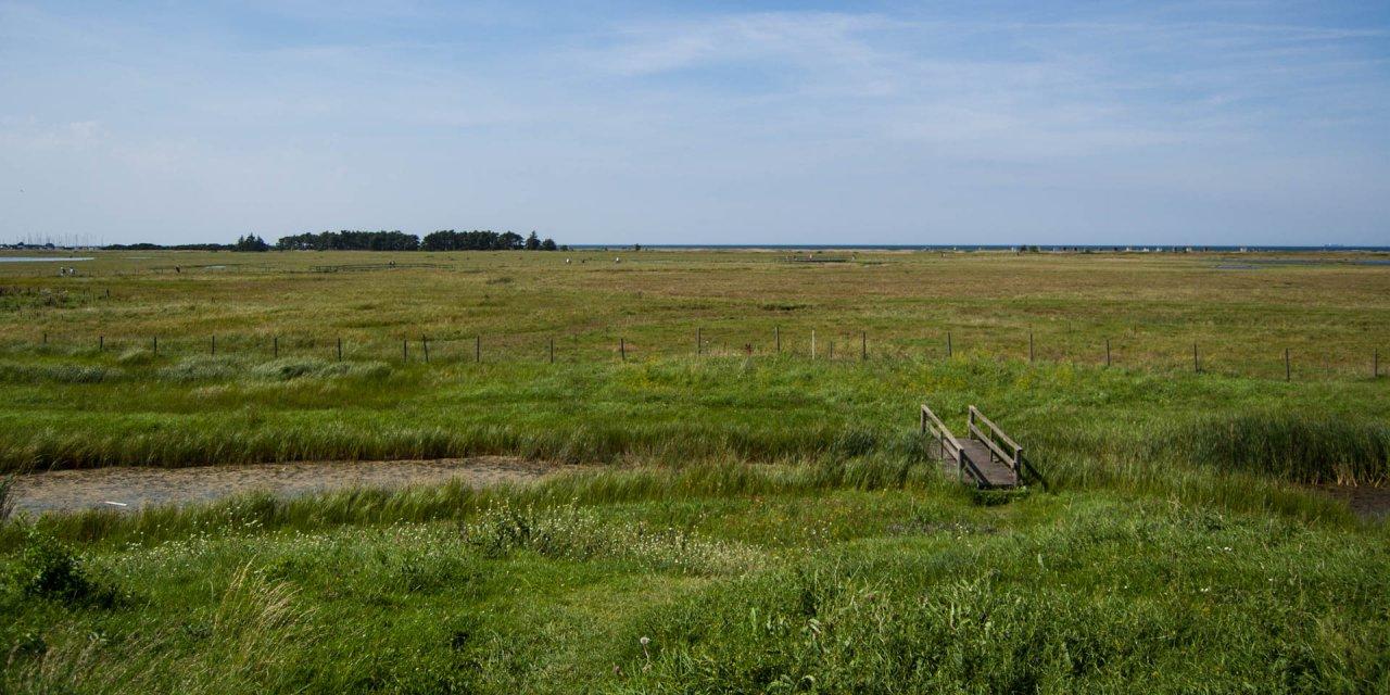 Flommens Naturreservat 2011