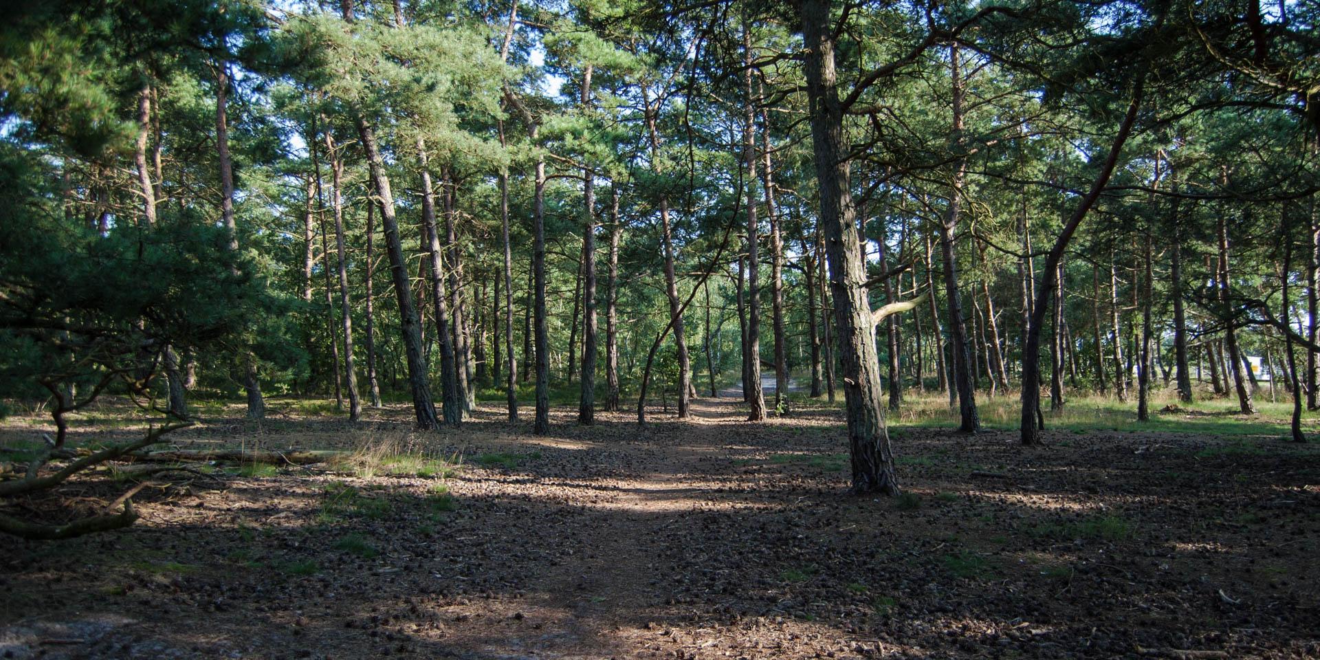 Kämpinge Strandbads Naturreservat 2011