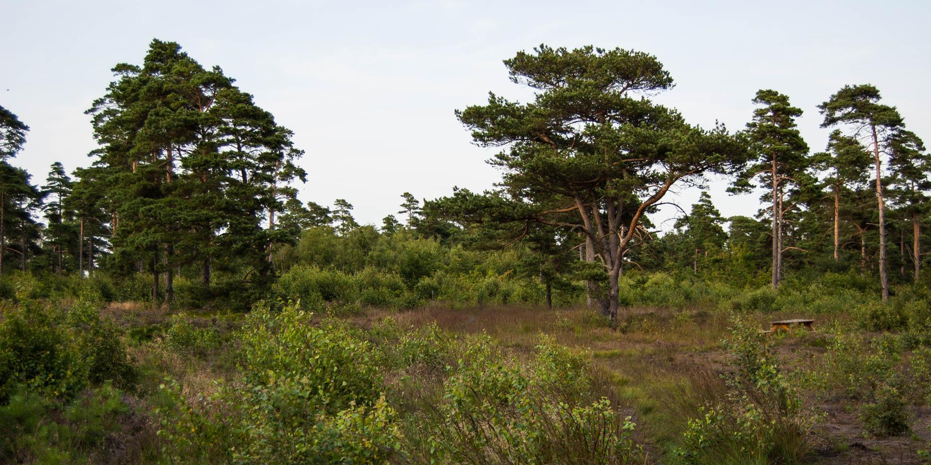 Skanörs Ljungs Naturreservat 2011