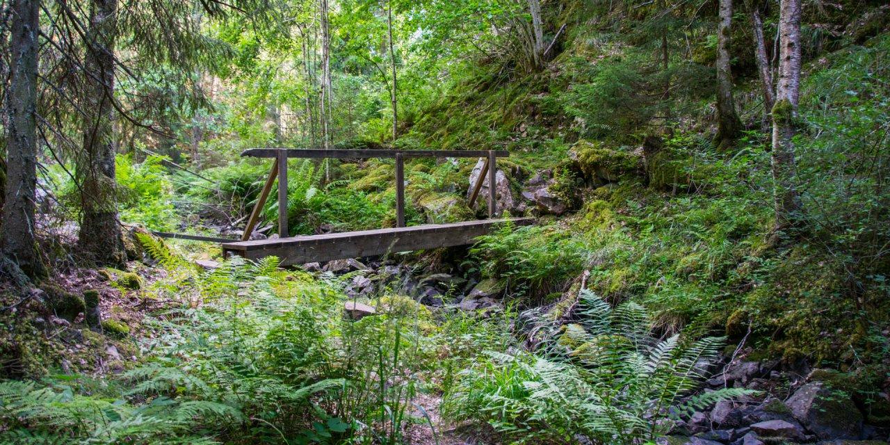 Helvetets Håla Naturreservat 2017