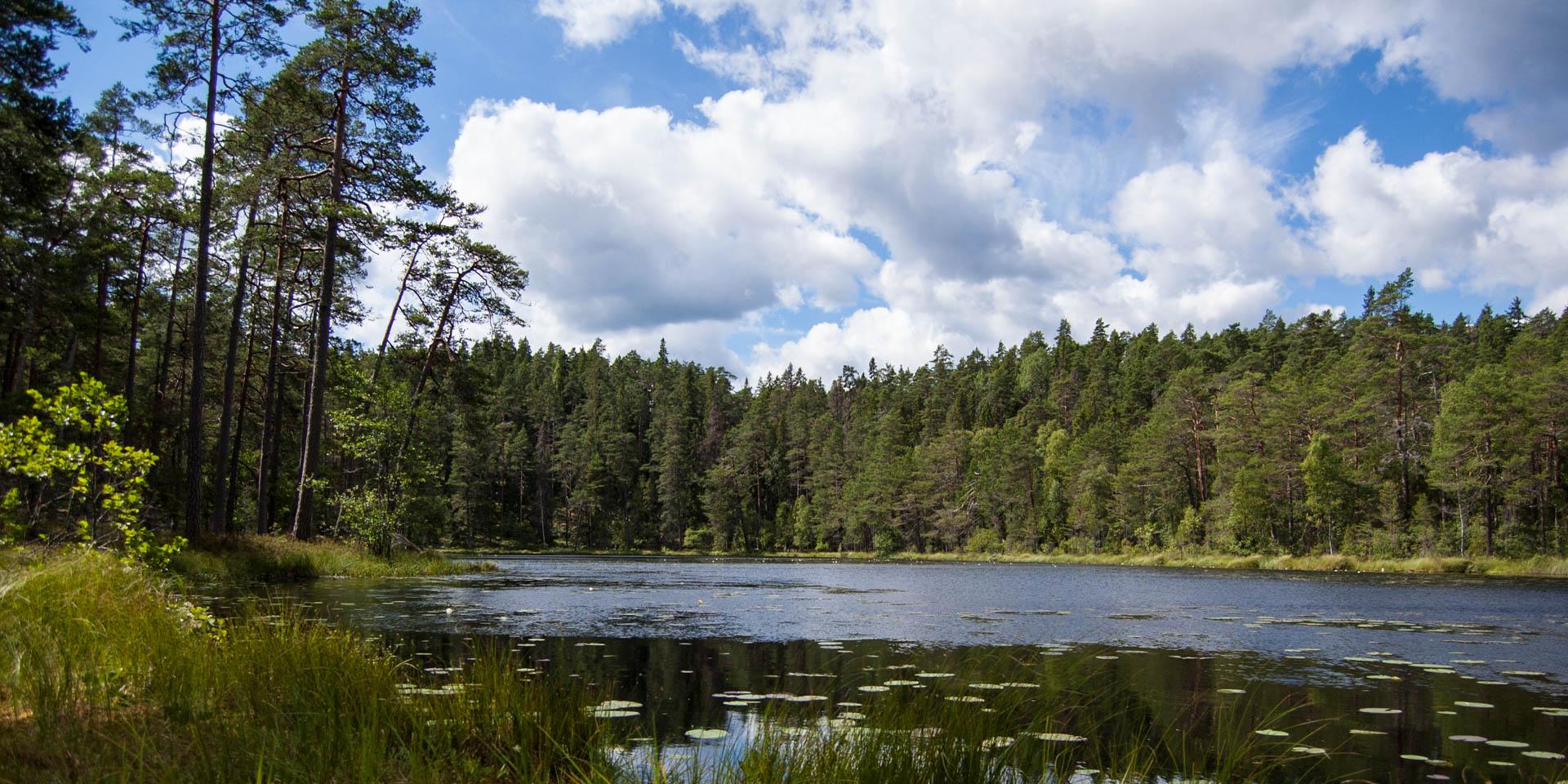 Norra Kvill Nationalpark 2013